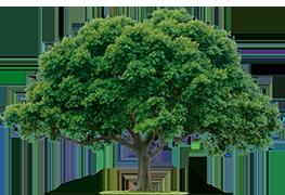 درختان نجات یافته جنگلبان
