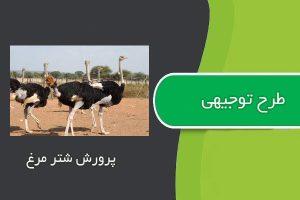 طرح توجيهي پرورش شتر مرغ