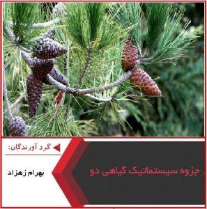 پاورپوینت جزوه سیستماتیک گیاهی دو
